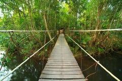 Ponte à selva, Khao Yai, Tailândia imagem de stock