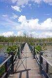 A ponte é cercada por árvores dos manguezais Fotos de Stock