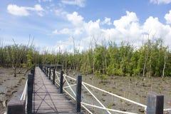 A ponte é cercada por árvores dos manguezais Foto de Stock