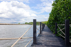 A ponte é cercada por árvores dos manguezais Imagens de Stock Royalty Free