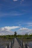 A ponte é cercada por árvores dos manguezais Imagem de Stock
