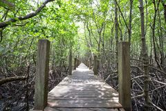 Ponte alla foresta della mangrovia fotografia stock libera da diritti