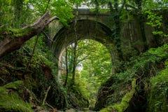 Ponte alta antiga da estrada de baixo nas madeiras Fotografia de Stock Royalty Free
