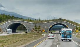 Ponte animale vicino a Banff, Canada fotografia stock