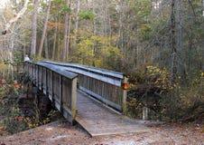 A ponte através dos pinhos imagem de stock royalty free