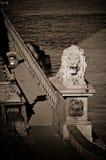 Ponte a catena con il leone, Budapest, Ungheria Fotografia Stock