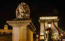 Ponte a catena Lion Budapest Hungary Immagine Stock Libera da Diritti