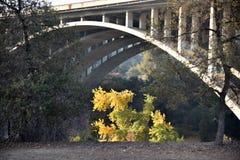 Ponte concreta bonita do arco Foto de Stock Royalty Free