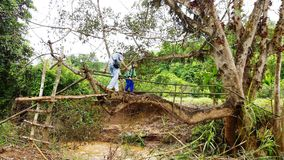 Ponte da árvore Imagens de Stock