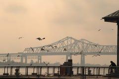 Ponte da baía de San Francisco-Oakland em Califórnia, América Uma pessoa está alimentando pássaros Foto de Stock Royalty Free