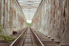 A ponte da estrada de ferro e o macaco fotografia de stock