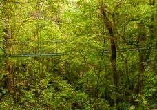 Ponte da floresta úmida Imagem de Stock Royalty Free