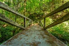 Ponte da floresta da sequoia vermelha de Califórnia imagem de stock