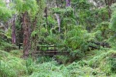 Ponte da região selvagem Foto de Stock