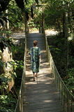 Ponte da selva, Brasil Fotos de Stock