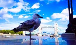 Ponte da torre de Londres foto de stock royalty free