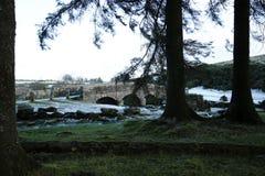 Ponte da válvula de Bellever Foto de Stock