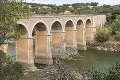 Ponte de ardilla nel Portogallo Immagine Stock