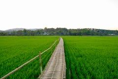 Ponte de bambu nos campos de almofada Fotografia de Stock Royalty Free