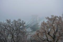 A ponte de corrente em uma manhã nevoenta, Budapest, Hungria fotos de stock royalty free