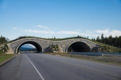 Ponte de cruzamento da estrada para animais Foto de Stock