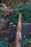 Ponte de log na floresta fotografia de stock royalty free