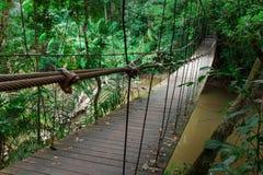 Ponte de madeira à selva Imagens de Stock Royalty Free