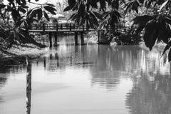 Ponte de madeira através do trajeto pequeno do rio Imagens de Stock Royalty Free