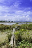 Ponte de madeira bonita que cruza o campo do canal e de almofada Fotos de Stock Royalty Free