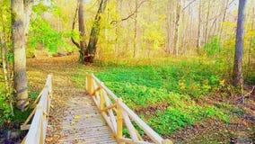 Ponte de madeira com as folhas de outono coloridas filme