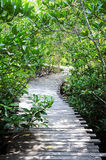 Ponte de madeira com floresta dos manguezais Imagem de Stock