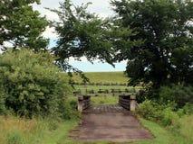 Ponte de madeira com um dossel de árvore Fotografia de Stock Royalty Free