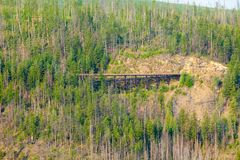 Ponte de madeira do trilho na floresta canadense fotos de stock