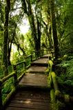 Ponte de madeira Doi Inthanon Tailândia Imagens de Stock Royalty Free