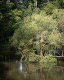 Ponte de madeira e árvore só no meio da lagoa pequena Imagens de Stock Royalty Free