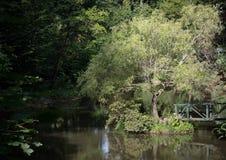 Ponte de madeira e árvore só no meio da lagoa pequena Fotos de Stock