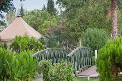 Ponte de madeira e cercado por flores e por palmeiras de florescência no fundo que aumenta acima das montanhas distantes Foto de Stock Royalty Free