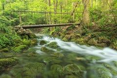 Ponte de madeira e ribeiro balbuciante na floresta, parque nacional de Beusnita, Roménia Fotos de Stock