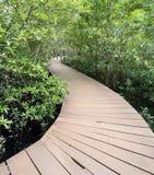 Ponte de madeira em frentes dos manguezais Fotografia de Stock