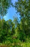 Ponte de madeira em uma floresta Imagem de Stock