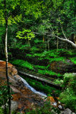 Ponte de madeira escorregadiço ao longo do canal da água em um desfiladeiro pequeno HDR Fotos de Stock Royalty Free