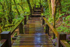 Ponte de madeira molhada Foto de Stock Royalty Free