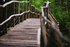 Ponte de madeira na floresta Imagem de Stock