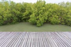Ponte de madeira na floresta dos manguezais fotos de stock