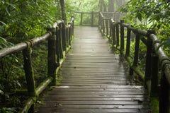 Trajeto de madeira na floresta Fotografia de Stock Royalty Free