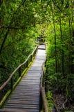 Ponte de madeira na floresta tropical tropical Imagens de Stock Royalty Free