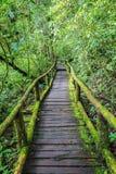 Ponte de madeira na floresta tropical tropical Imagem de Stock