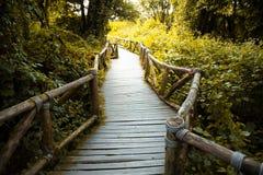 Ponte de madeira na floresta tropical tropical enevoada em Doi Inthanon, tailandês Imagem de Stock Royalty Free