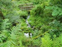 Ponte de madeira nas paisagens do verde do rio fotografia de stock