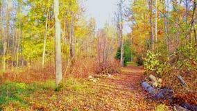Ponte de madeira no dia do outono video estoque